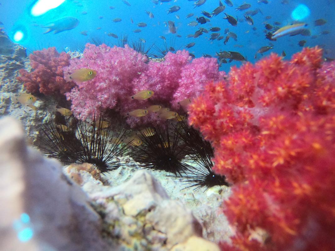 Suomalainen sukelluskeskus Thaimaan Phuketissa suomalainen
